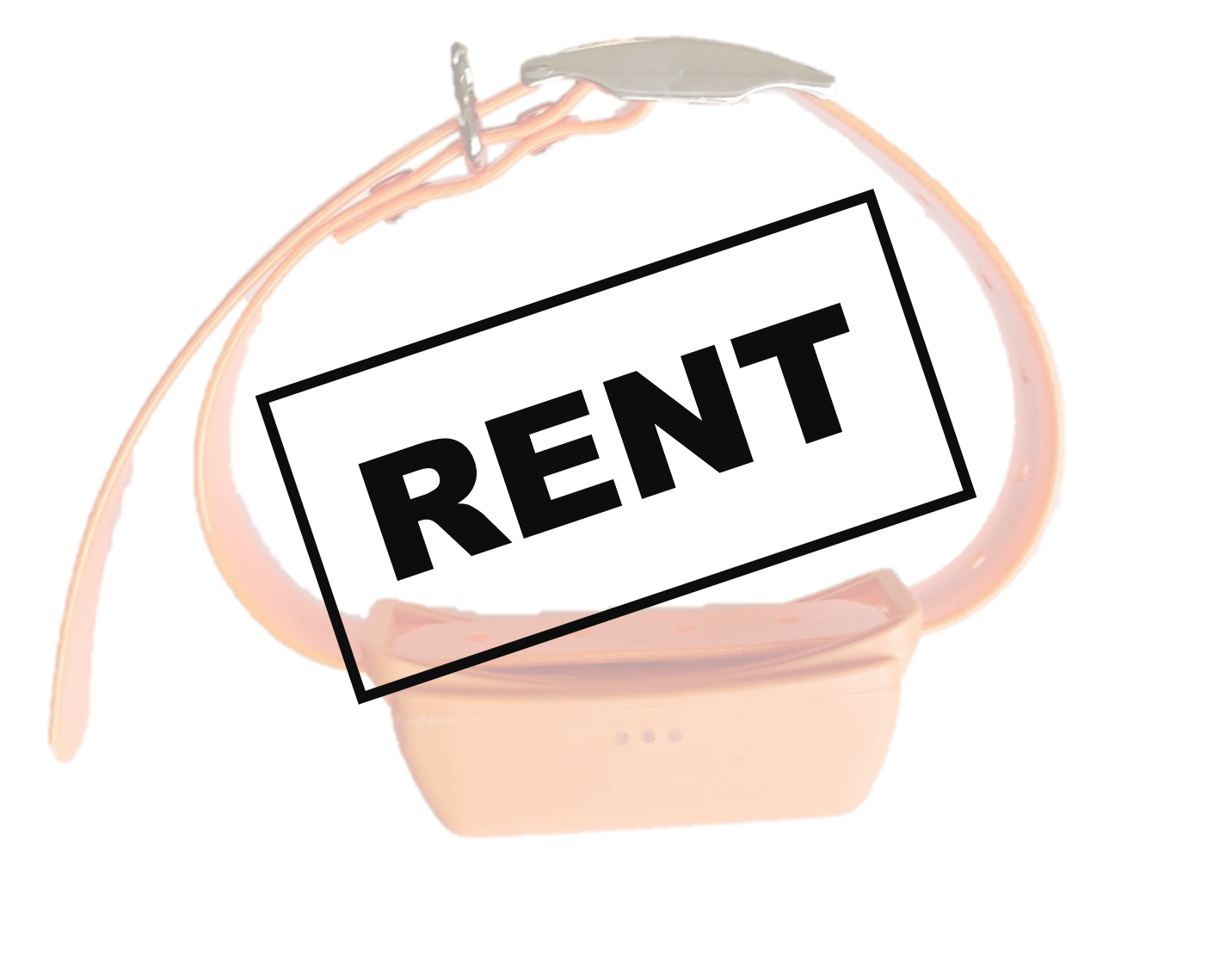 Rent of dog tracker – 1 month